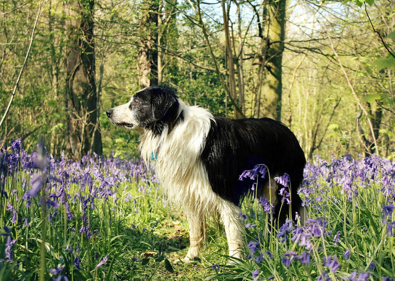 The Bluebell Woods by micromeg