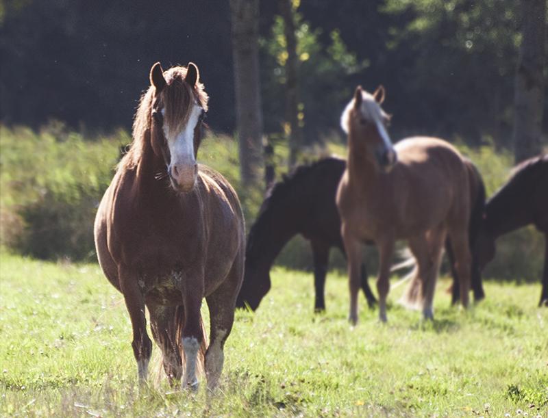 My little pony by Loistavia