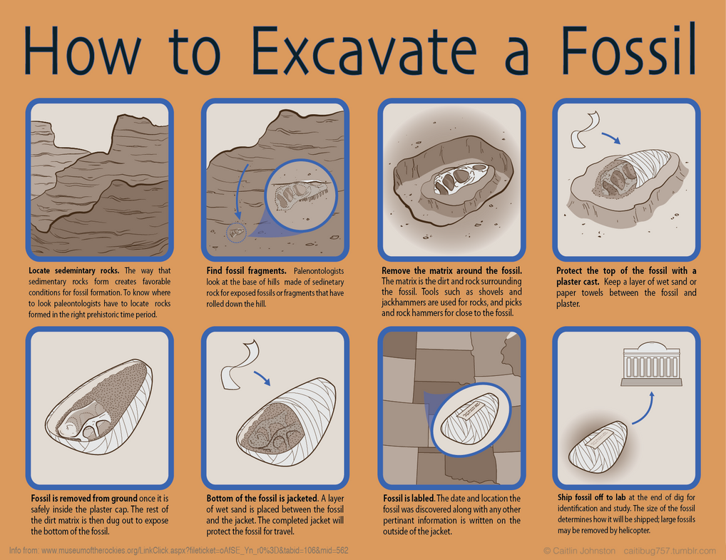 How to excavate a fossil by drummergirl375 on deviantart how to excavate a fossil by drummergirl375 pooptronica