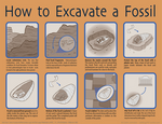 How to Excavate a Fossil