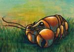 Craw-Bob
