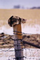 Iowa Fence Cat by MegLyman
