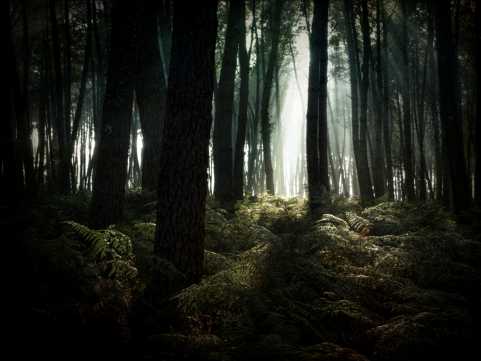 In the Dark Woods by fibreciment