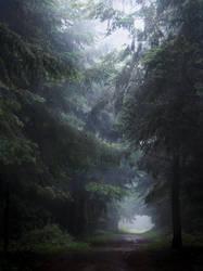 Foggy Mood by fibreciment