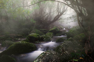 STOCK : ENCHANTED FOREST : PREMADE BACKGROUND by thehouseofphotoshop