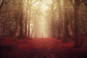 STOCK : AUTUMN / FALL FOREST : PREMADE BACKGROUND by thehouseofphotoshop