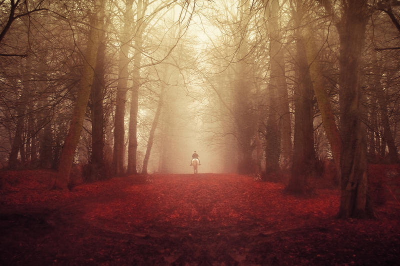 stock autumn fall forest premade background by