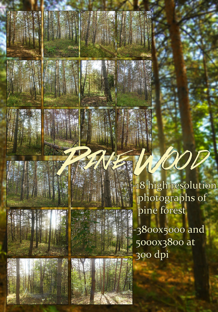 Pine Wood, photography collection by KlaraKay