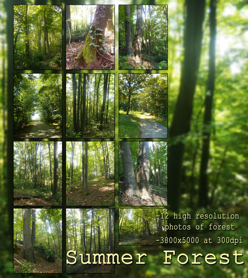 Summer Forest, photography collection by KlaraKay
