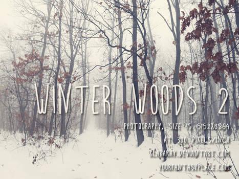 Winter Woods 2