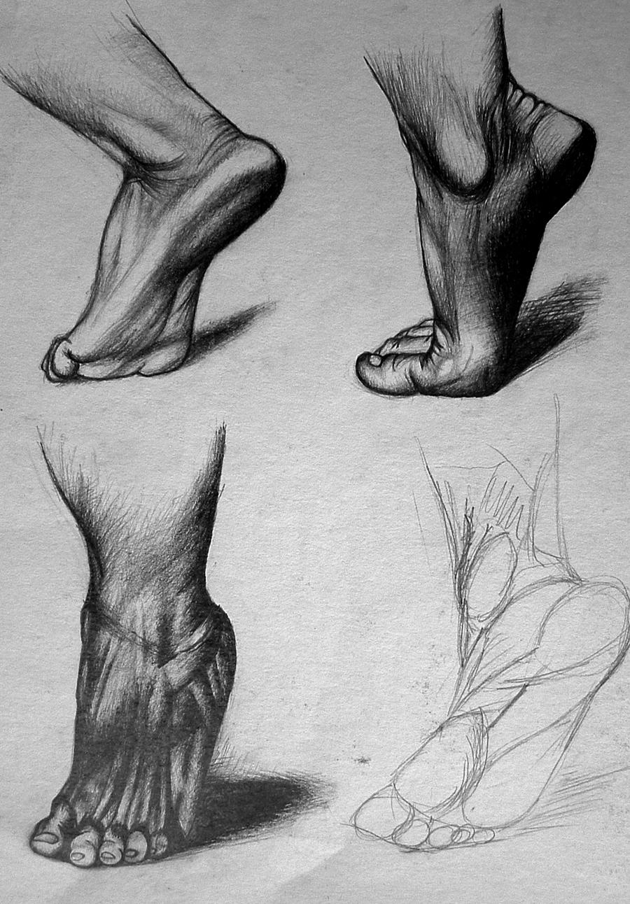 Foot anatomy by AndreaLantosX3 on DeviantArt