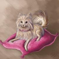 Pomeranian by timmytier