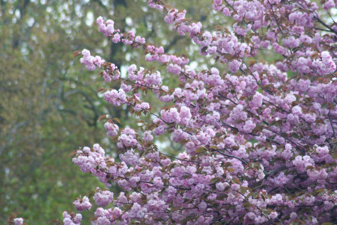 Blooming Trees Art Craft