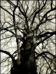 Under the weeping sky by TheEndlessFeed