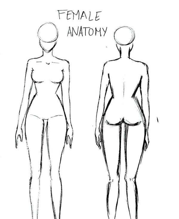 Female Anatomy By Atomicmangosadopts On Deviantart
