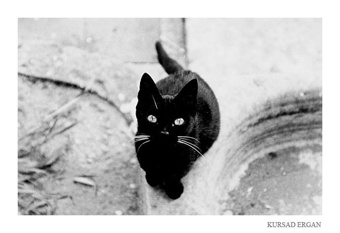 """Obrázek """"http://fc08.deviantart.com/fs5/i/2004/319/5/3/black_cat_by_kursad.jpg"""" nelze zobrazit, protože obsahuje chyby."""