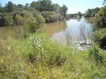 muddy river stock