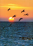 Fly Away by mim304