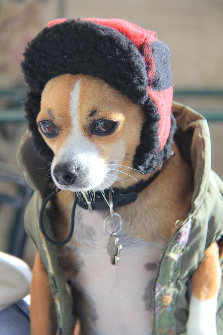 My 'Huntin' Dawg' by mim304