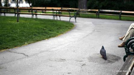 lonely pidgeon by fabbazattt