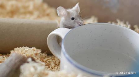 mouse by fabbazattt