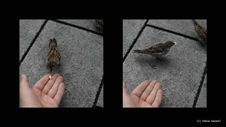 feeding sparrows by fabbazattt