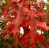 Autumn's Splendor II by Cinnamoncandy