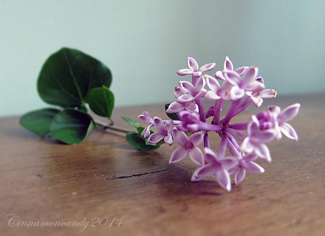 Lilac by Cinnamoncandy