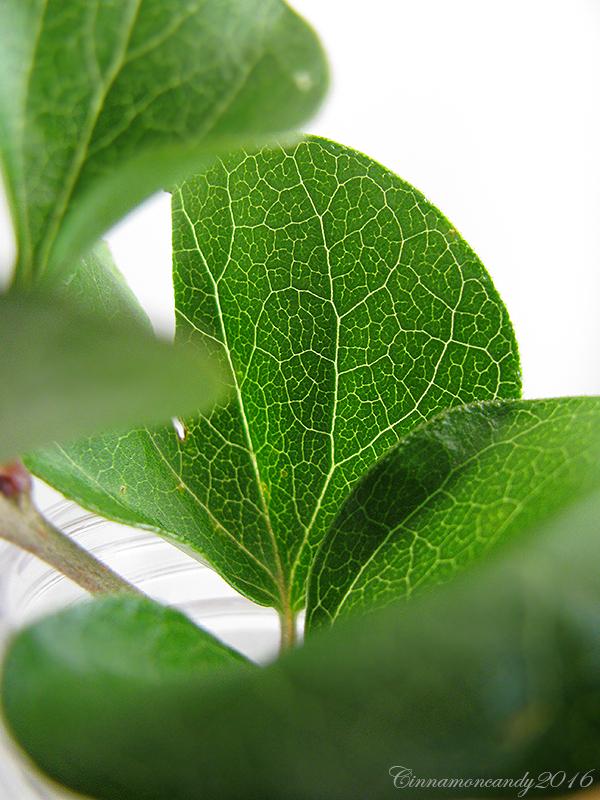 Veins II by Cinnamoncandy