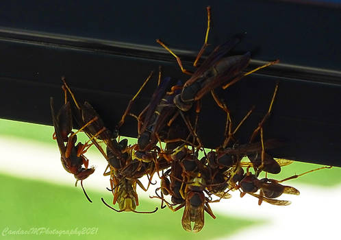 Party of Stingers