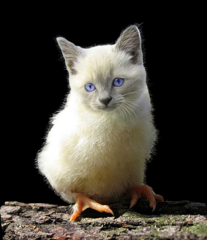 Pussy-chick