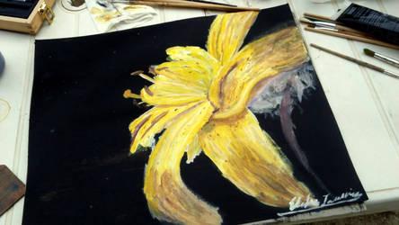 Yellow lys