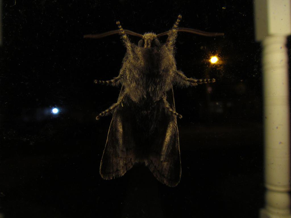 Moth by assassin4