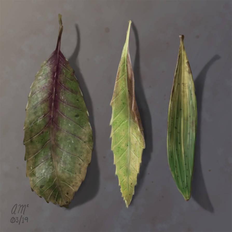 Leaf Study by AndrewMcIntoshArt
