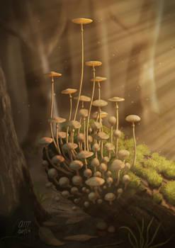 Warm Mushrooms