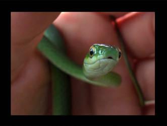 my new snake named Knots by Treekami