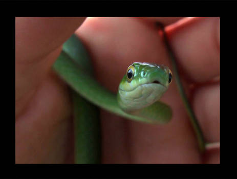 my new snake named Knots