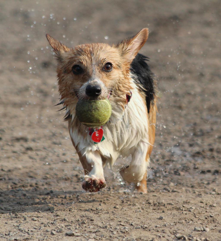 Ball, Ball, Ball by Treekami