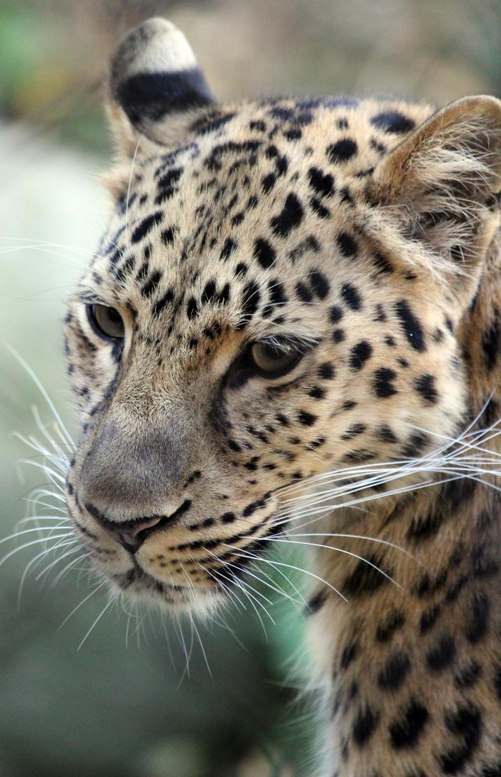 Leopard Spots by Treekami