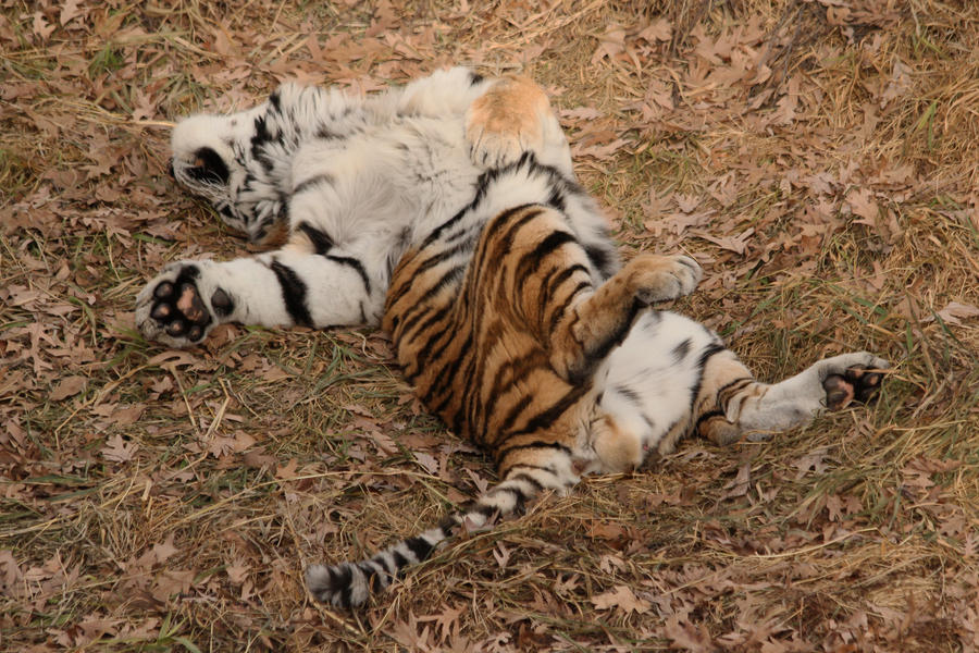 Talk About Lazy! by Treekami