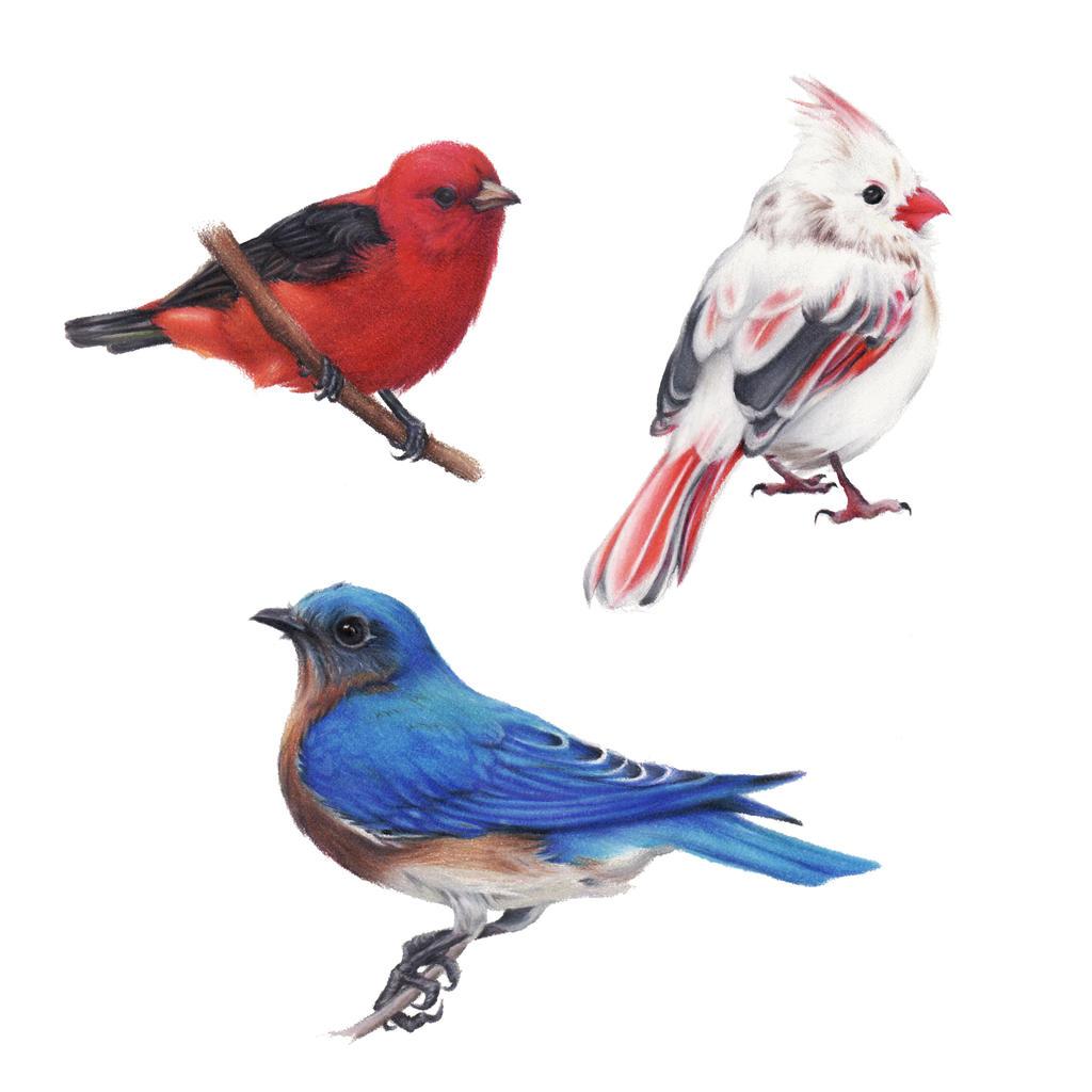 Cute Birds by ZoeStanleyArts