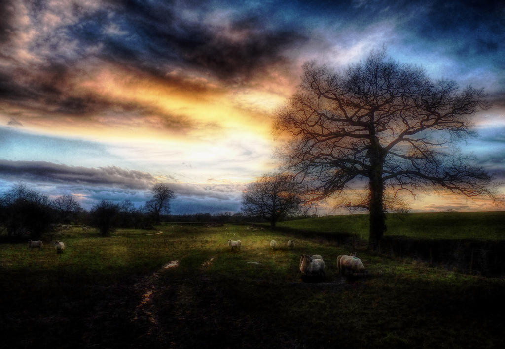 Late Evening Sheep by Spikey-T