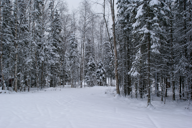 Wintery Corridor by ChaseLee-LIA