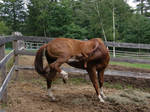 horse stock 25