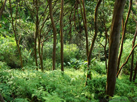 Green Jungle by pyra