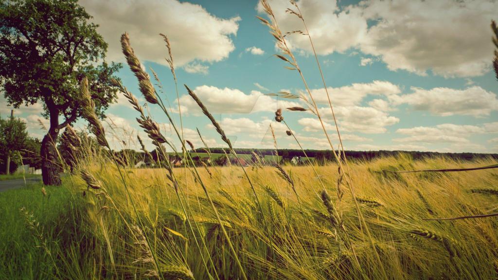 Summer by Shiriki-Kashika