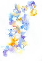 Watercolor: Hydrangea by muttiy