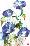 Watercolor: Morning-glory