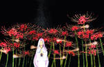 Song of lycoris