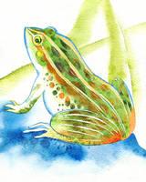 Frog by muttiy
